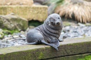 Baby Seal: A Home Invasion Down Under!