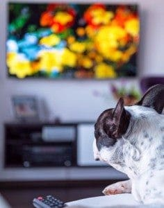 Pamper Your Pooch with DogTV
