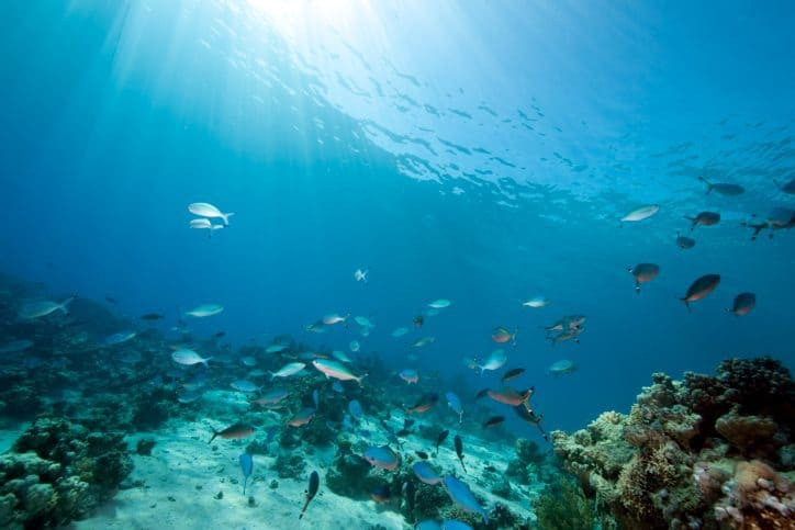 mother ocean, mother earth