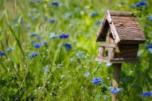 Make Your Garden a Wildlife Sanctuary