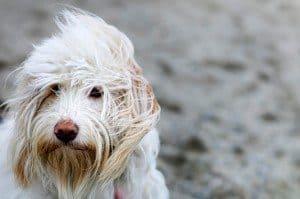 Meet Fiona: My Canine Co-Therapist