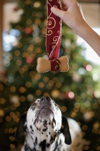 Gifts for Your Four-Legged Friends