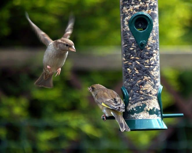 national bird day, bird day, birds, birding, bird feeder
