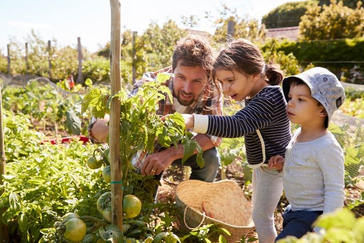 organic mulch, organic garden