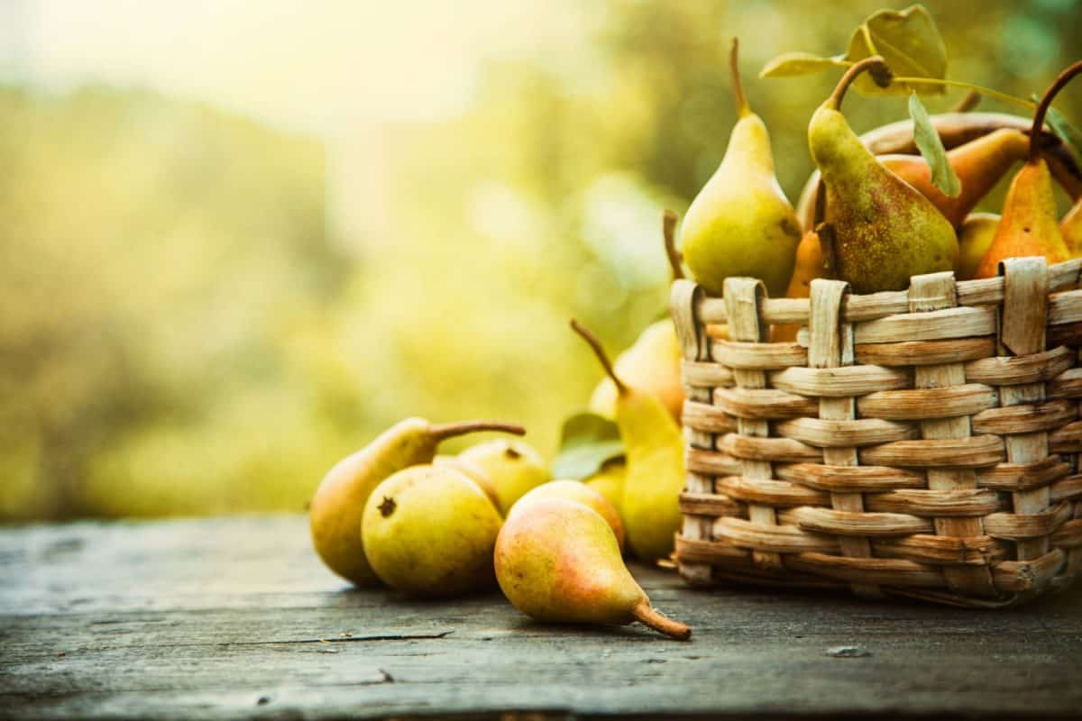 pear month, pear dishes, pears