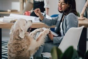 Pet-Friendly Offices
