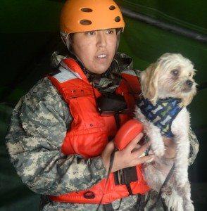Aid for Houston Animals