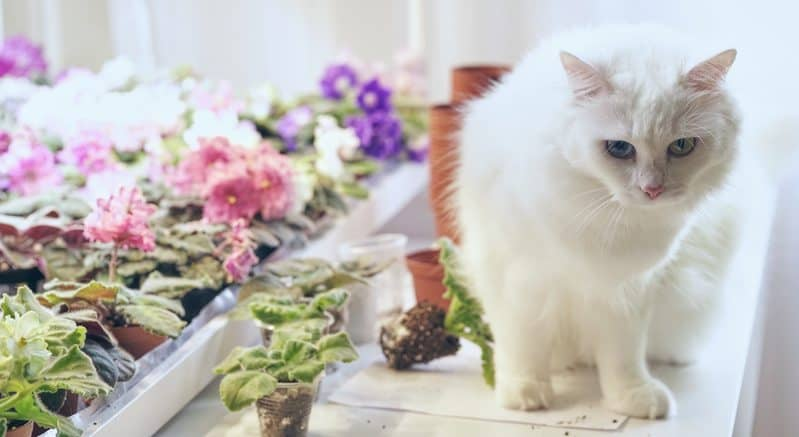 Indoor Cat Garden, Mindful Gardening