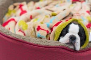 4 Super Cute DIY Pet Beds