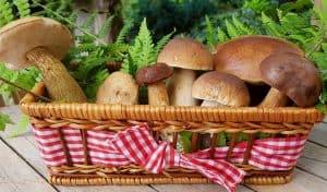 Easy, Healthy Mushroom Soup